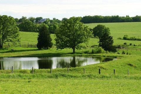 Landscape - Pond